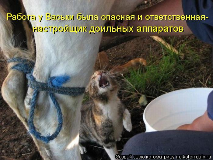 Котоматрица: Работа у Васьки была опасная и ответственная- настройщик доильных аппаратов
