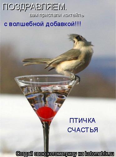 Котоматрица: ПОЗДРАВЛЯЕМ. вам прислали коктейль с волшебной добавкой!!! ПТИЧКА СЧАСТЬЯ