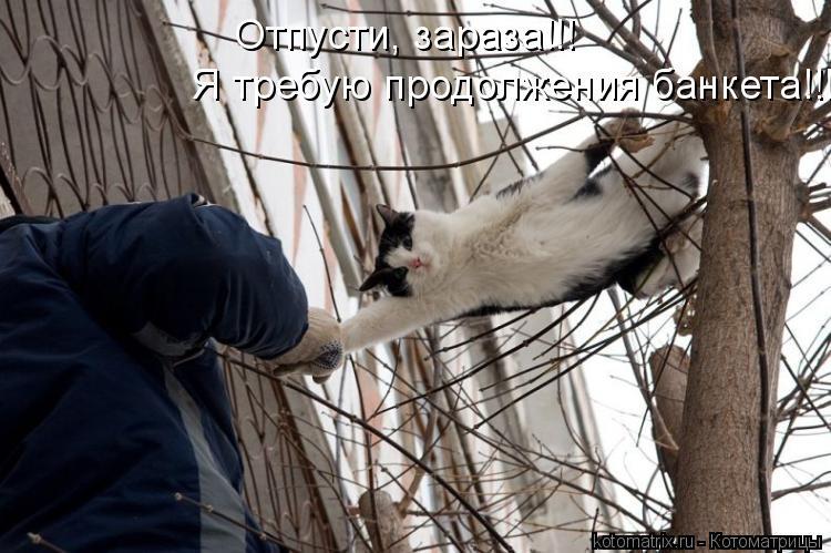 Котоматрица: Отпусти, зараза!!!   Я требую продолжения банкета!!!