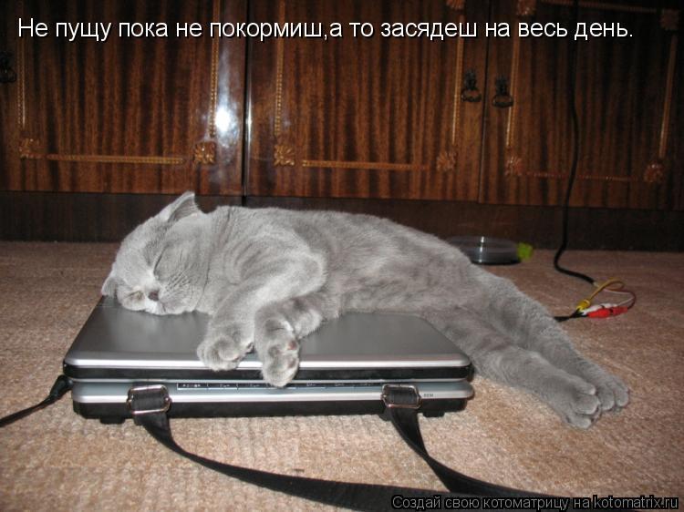 Котоматрица: Не пущу пока не покормиш,а то засядеш на весь день.