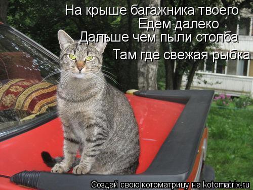 Котоматрица: На крыше багажника твоего Едем далеко Дальше чем пыли столба Там где свежая рыбка