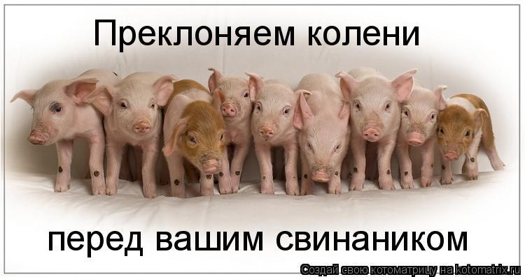 Котоматрица: Преклоняем колени  перед вашим свинаником