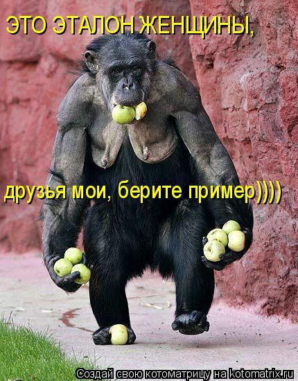 Котоматрица: ЭТО ЭТАЛОН ЖЕНЩИНЫ, друзья мои, берите пример))))
