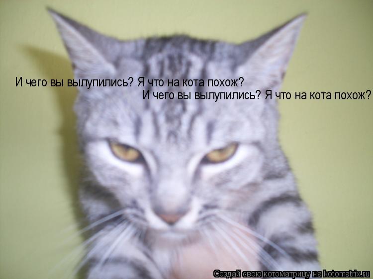 Котоматрица: И чего вы вылупились? Я что на кота похож? И чего вы вылупились? Я что на кота похож?