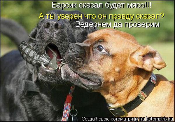 Котоматрица: Барсик сказал будет мясо!!! А ты уверен что он правду сказал? Ведернем да проверим