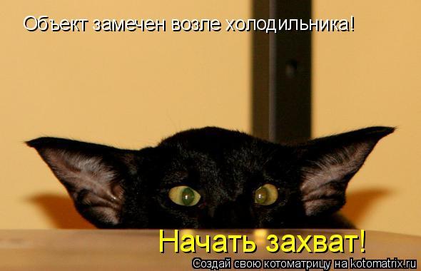 Котоматрица: Объект замечен возле холодильника! Начать захват!