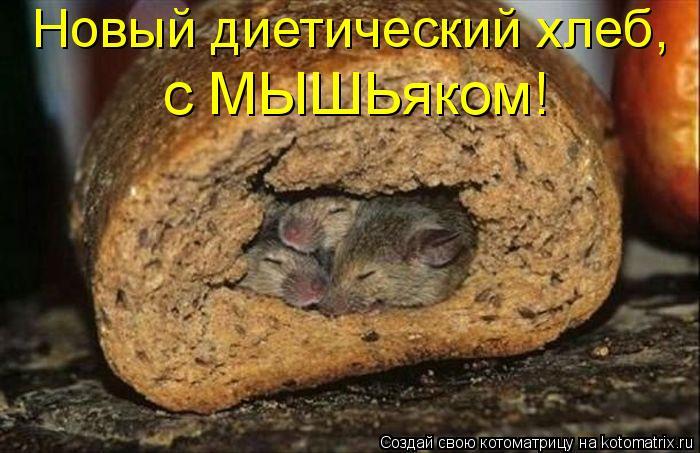 Котоматрица: Новый диетический хлеб,  с МЫШЬяком!
