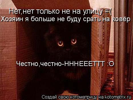 Котоматрица: Нет,нет только не на улицу =( Хозяин я больше не буду срать на ковёр Честно,честно-НННЕЕЕТТТ :O