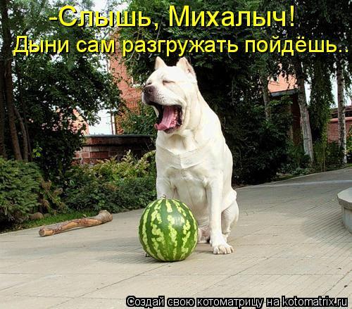 Котоматрица: -Слышь, Михалыч! Дыни сам разгружать пойдёшь...