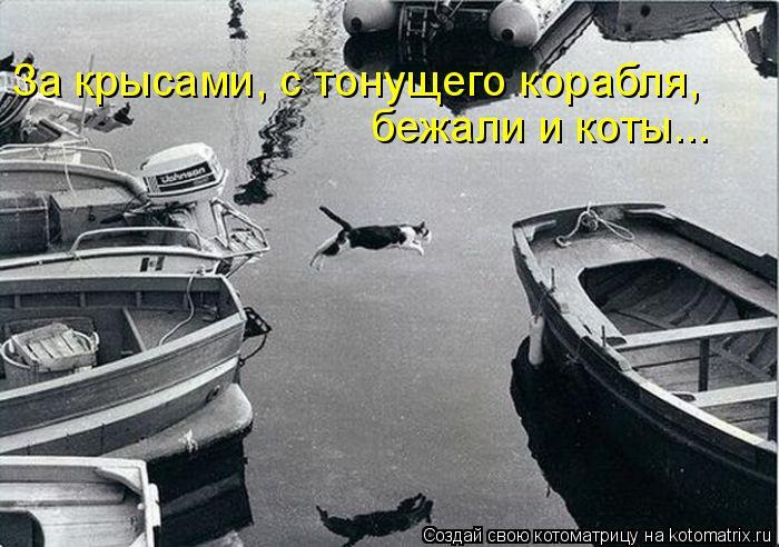 Котоматрица: За крысами, с тонущего корабля,  бежали и коты...