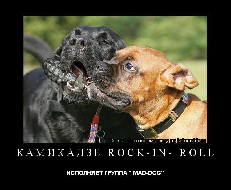 "Котоматрица: камикадзе rock-in- roll ИСПОЛНЯЕТ ГРУППА "" MAD-DOG"""