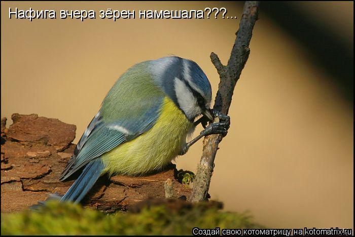Котоматрица: Нафига вчера зёрен намешала???...