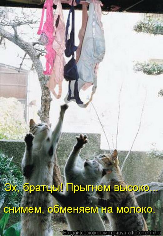 Котоматрица: Эх, братцы! Прыгнем высоко...  снимем, обменяем на молоко…