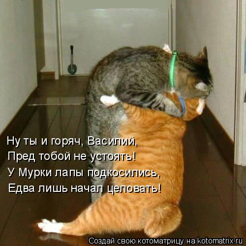 Котоматрица: Ну ты и горяч, Василий, Пред тобой не устоять! У Мурки лапы подкосились, Едва лишь начал целовать!