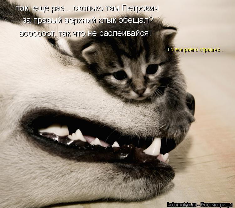Котоматрица: воооооот, так что не раслеивайся! но все равно страшно... так, еще раз... сколько там Петрович  за правый верхний клык обещал?