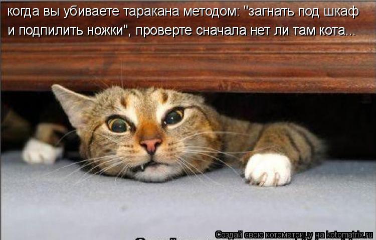 """Котоматрица: когда вы убиваете таракана методом: """"загнать под шкаф  когда вы убиваете таракана методом: """"загнать под шкаф  и подпилить ножки"""", проверте сн"""