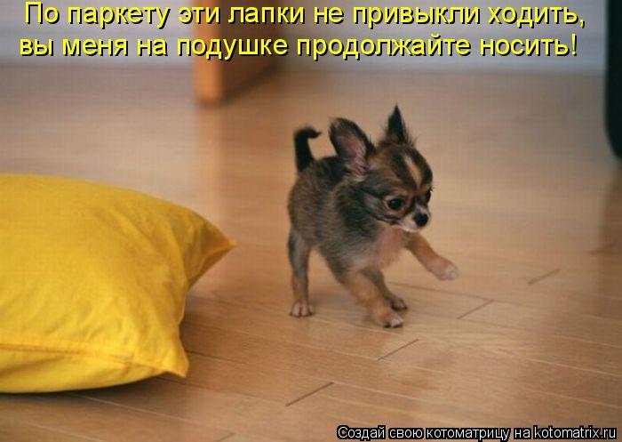 Котоматрица: По паркету эти лапки не привыкли ходить,  вы меня на подушке продолжайте носить!