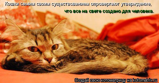 Котоматрица: Кошки самим своим существованием опровергают утверждение,  что все на свете создано для человека.
