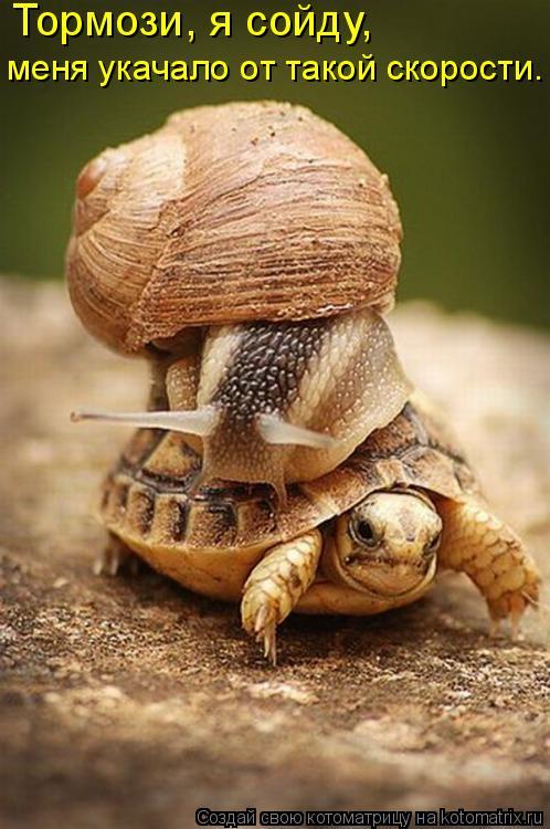 Котоматрица: Тормози, я сойду,  меня укачало от такой скорости.