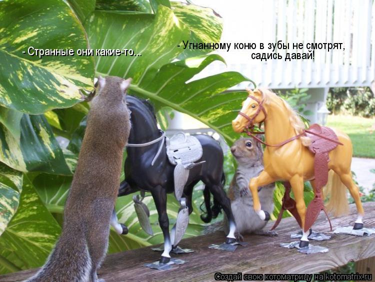 Котоматрица: - Угнанному коню в зубы не смотрят, садись давай! - Странные они какие-то...