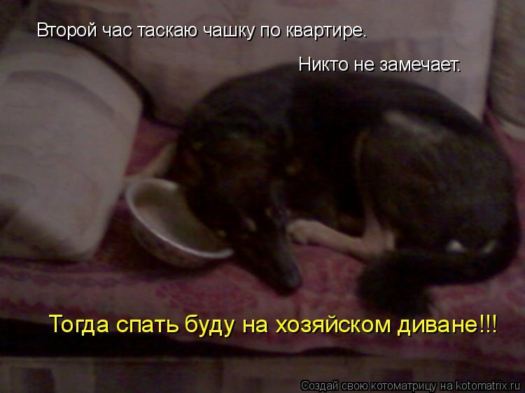 Котоматрица: Второй час таскаю чашку по квартире. Никто не замечает. Тогда спать буду на хозяйском диване!!!
