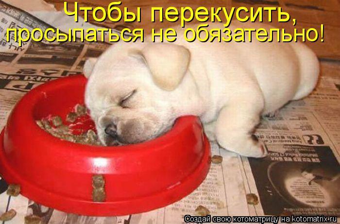 Котоматрица: Чтобы перекусить,  просыпаться не обязательно!