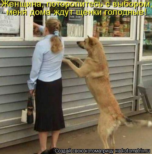 Котоматрица: Женщина, поторопитесь с выбором,  меня дома ждут щенки голодные!