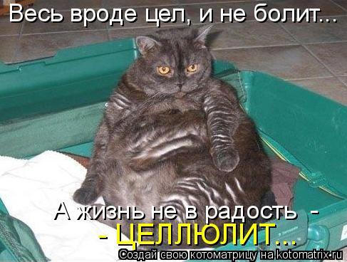 Котоматрица: - ЦЕЛЛЮЛИТ... А жизнь не в радость  -  Весь вроде цел, и не болит...