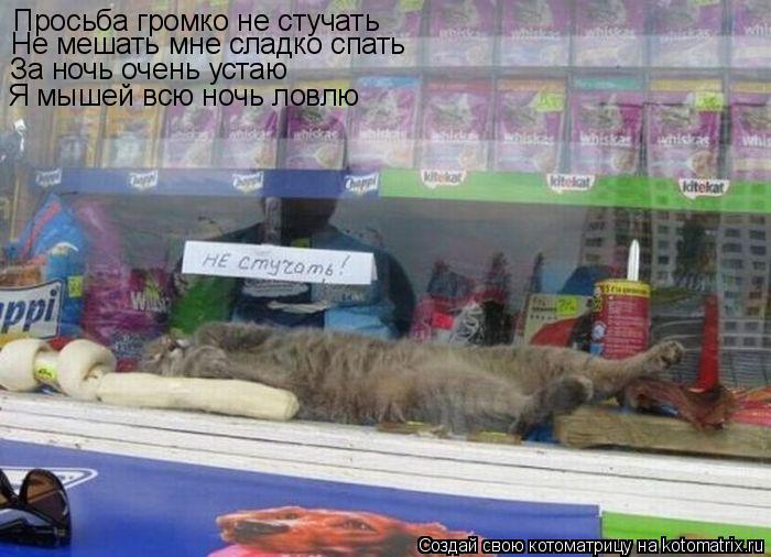 Котоматрица: Просьба громко не стучать Не мешать мне сладко спать За ночь очень устаю Я мышей всю ночь ловлю