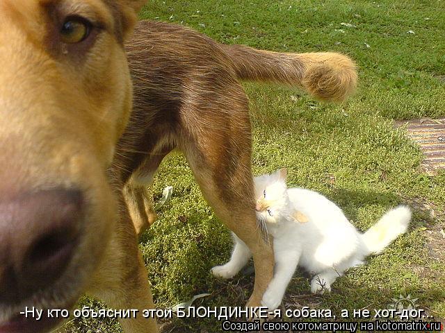 Котоматрица: -Ну кто объяснит этой БЛОНДИНКЕ-я собака, а не хот-дог...