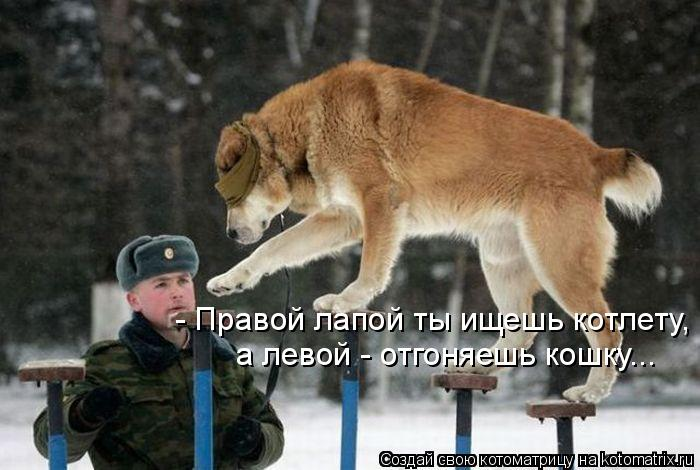 Котоматрица: - Правой лапой ты ищешь котлету, а левой - отгоняешь кошку...