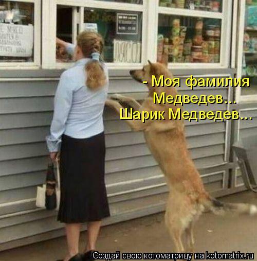 Котоматрица: - Моя фамилия  Медведев... Шарик Медведев...