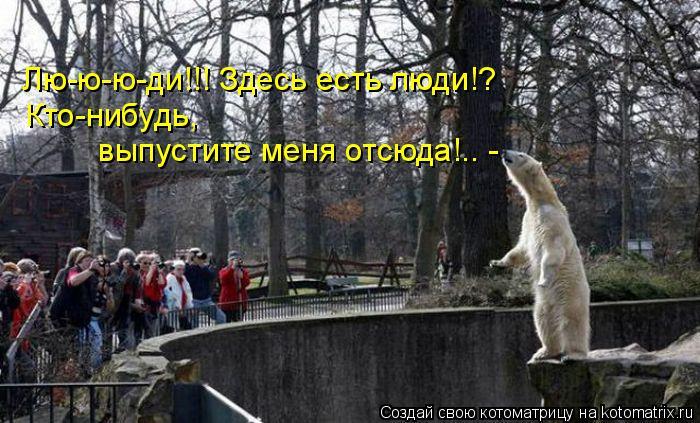 Котоматрица: Лю-ю-ю-ди!!! Здесь есть люди!? Кто-нибудь,  выпустите меня отсюда!.. -