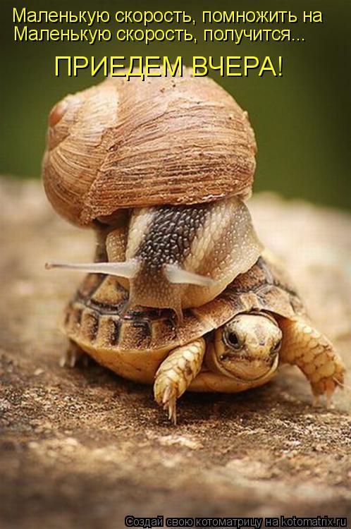 Котоматрица: Маленькую скорость, помножить на  Маленькую скорость, получится... ПРИЕДЕМ ВЧЕРА!