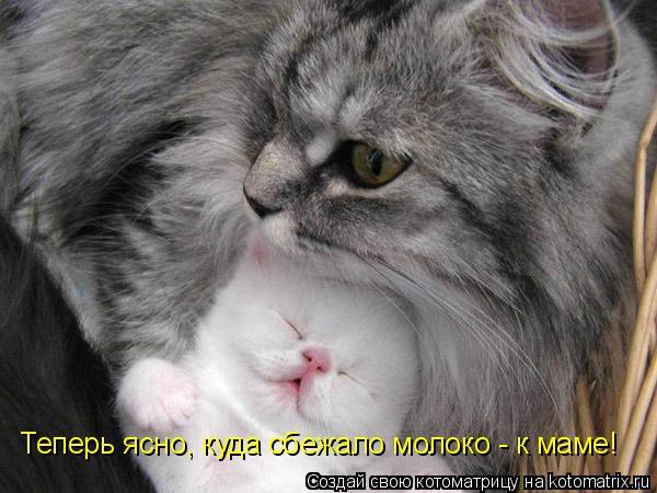 Котоматрица: Теперь ясно, куда сбежало молоко - к маме!