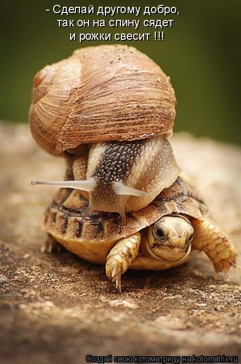 Котоматрица: - Сделай другому добро, так он на спину сядет и рожки свесит !!!