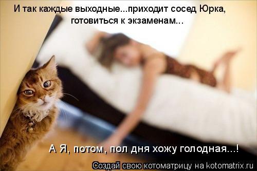 Котоматрица: И так каждые выходные...приходит сосед Юрка, готовиться к экзаменам... А Я, потом, пол дня хожу голодная...!