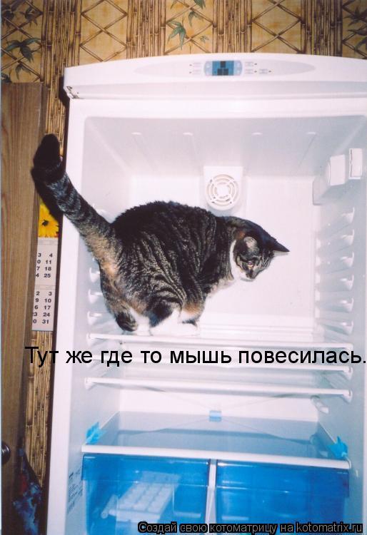 Котоматрица: Тут же где то мышь повесилась.