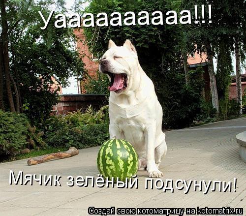 Котоматрица: Уаааааааааа!!! Мячик зелёный подсунули!