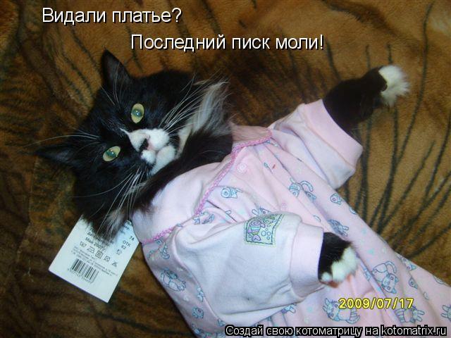 Котоматрица: Видали платье? Последний писк моли!
