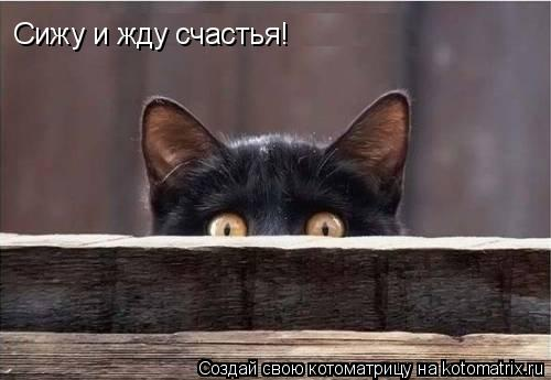 Котоматрица: Сижу и жду счастья!