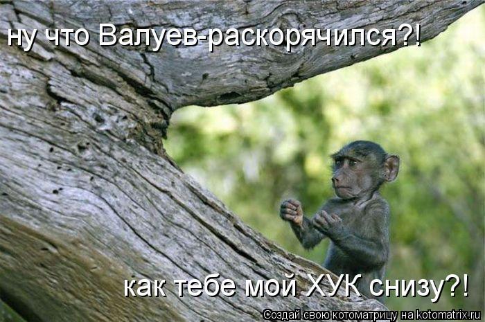 Котоматрица: ну что Валуев-раскорячился?! как тебе мой ХУК снизу?!