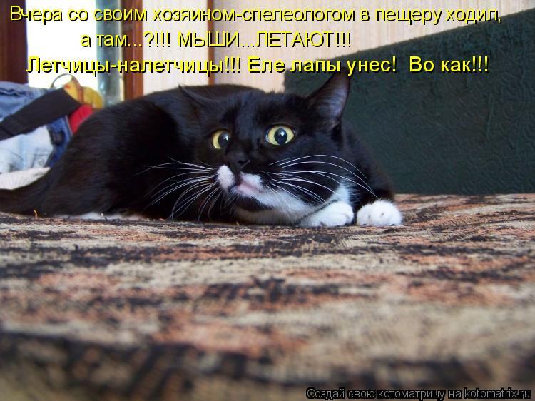 Котоматрица: Вчера со своим хозяином-спелеологом в пещеру ходил,  а там...?!!! МЫШИ...ЛЕТАЮТ!!! Летчицы-налетчицы!!! Еле лапы унес!  Во как!!!