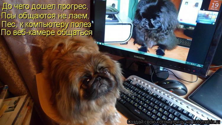 Котоматрица: До чего дошел прогрес, Псы общаются не лаем, Пес, к компьютеру полез По веб-камере общаться