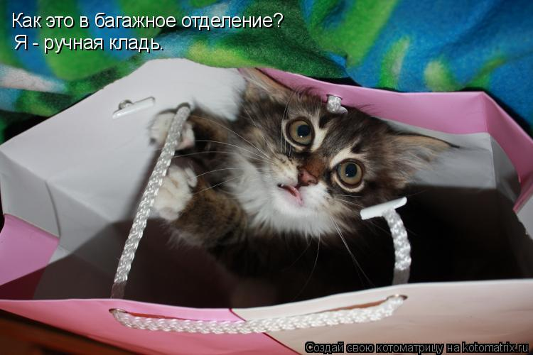 Котоматрица: Как это в багажное отделение? Я - ручная кладь.