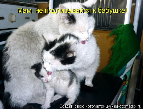 Котоматрица: Мам, не подлизывайся к бабушке!