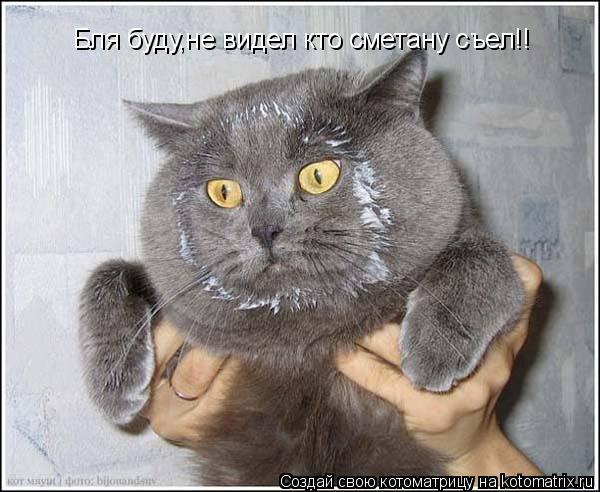 Котоматрица: Бля буду,не видел кто сметану съел!!