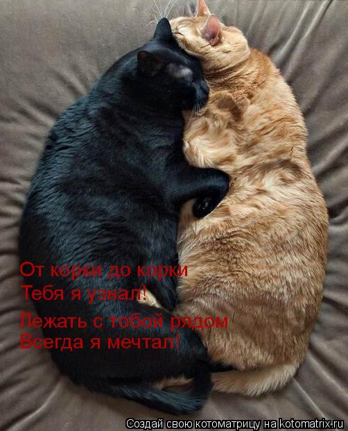 Котоматрица: От корки до корки Тебя я узнал! Лежать с тобой рядом Всегда я мечтал!