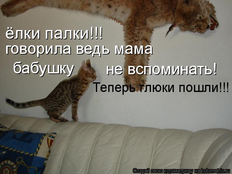 Котоматрица: ёлки палки!!! говорила ведь мама  бабушку не вспоминать!  Теперь глюки пошли!!!