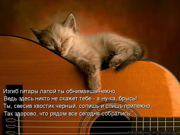Котоматрица: Изгиб гитары лапой ты обнимаешь нежно, Ведь здесь никто не скажет тебе - а ну-ка, брысь! Ты, свесив хвостик черный, сопишь и спишь прилежно, Та
